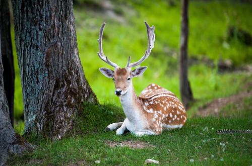 Animal-image