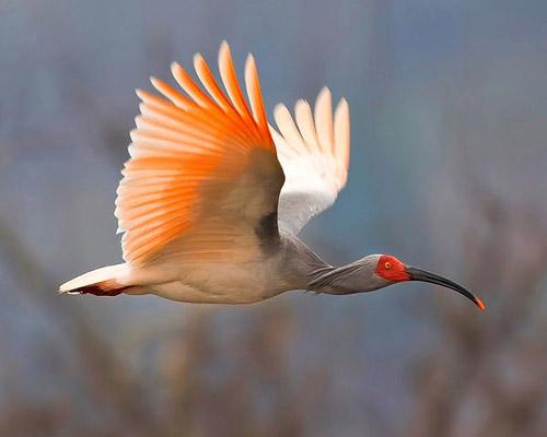 bird-greeting2