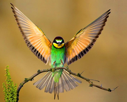 birds-greeting1