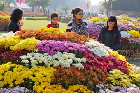 At Terraced Garden, Chandigarh Chrysanthemum Flower Show 2016