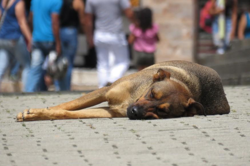 dog-2399764_1920