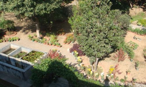 botanic-garden-chd