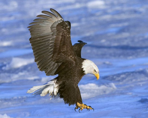 bird-greeting