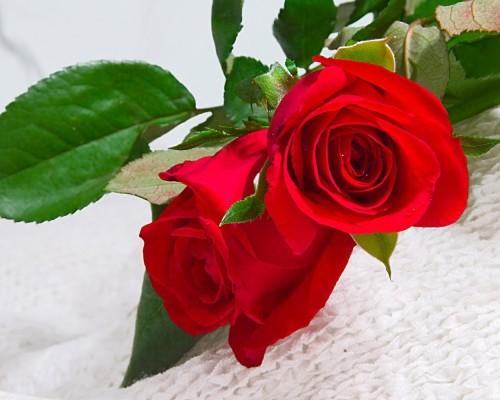 flower-greeting1