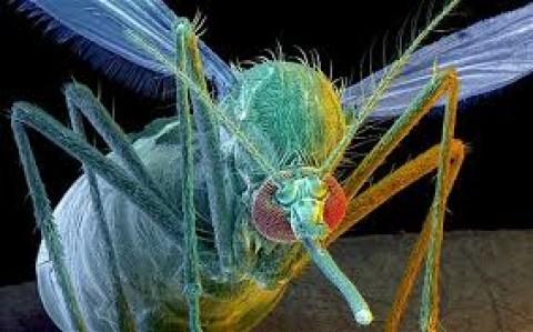 Dengue caused Panic amongst the people