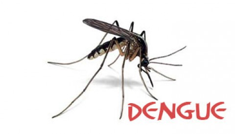 720 Cases Of Dengue And Still Counting