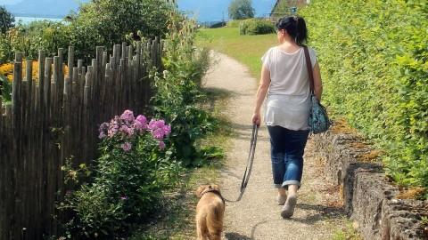No More Prohibition For Your Pet Dogs Across Public Gardens & Parks