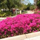 bougainvillea-garden-chandigarh-timings