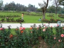 zakir-rose-garden-chandigarh